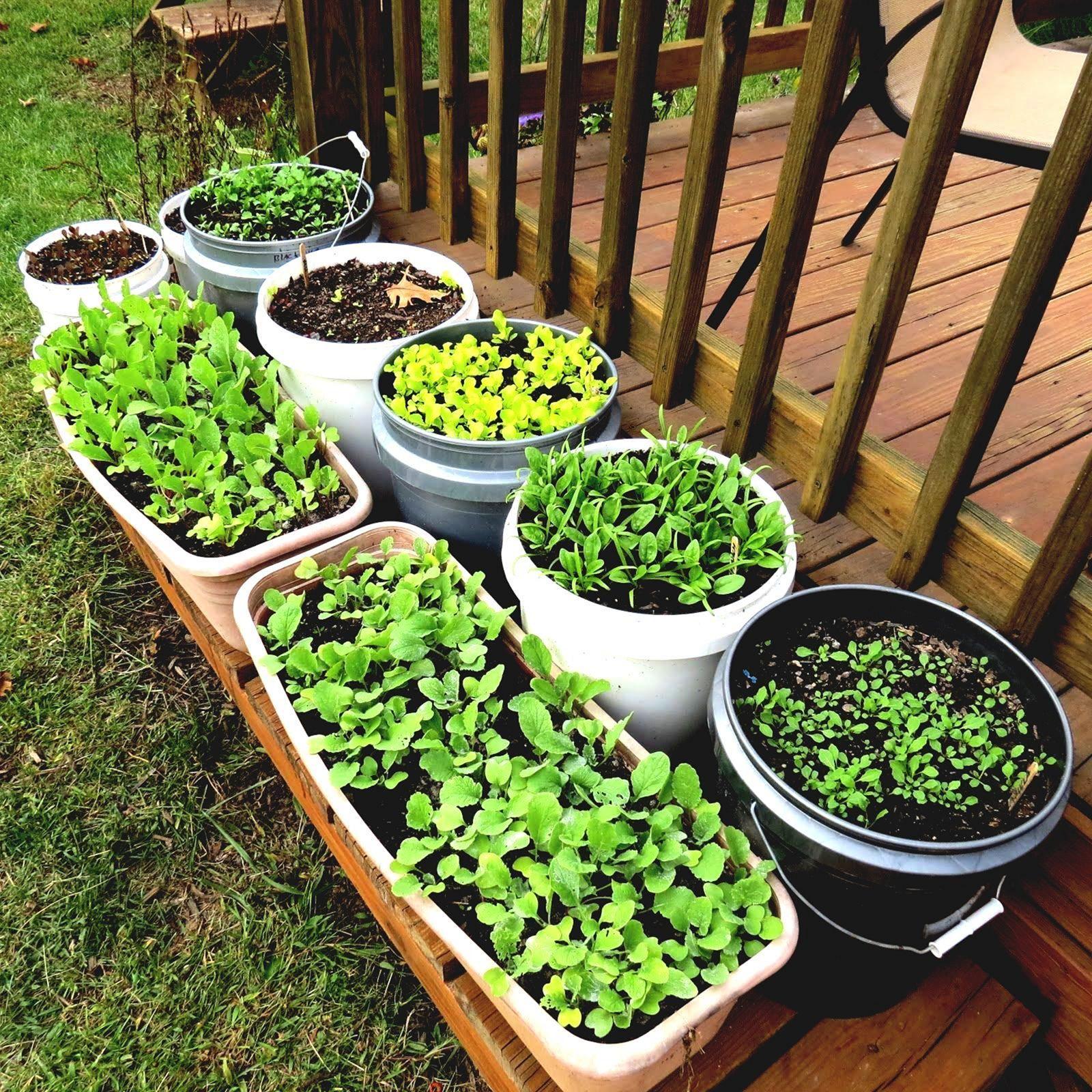 35 Advantageous Small Vegetable Garden Ideas for Your ...