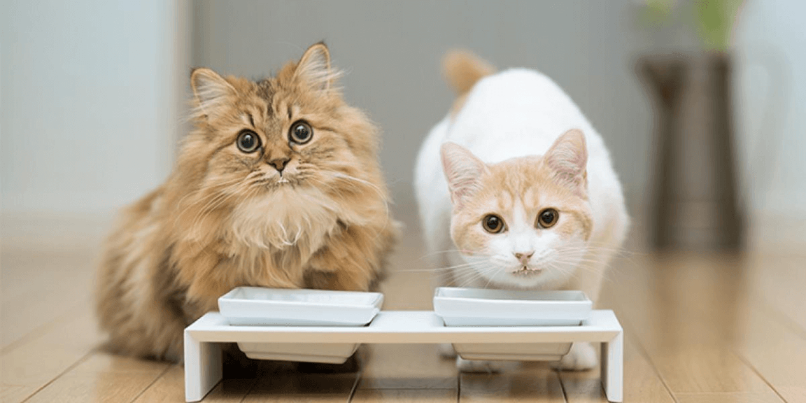 Food You Should not be feeding to your cat Teeth