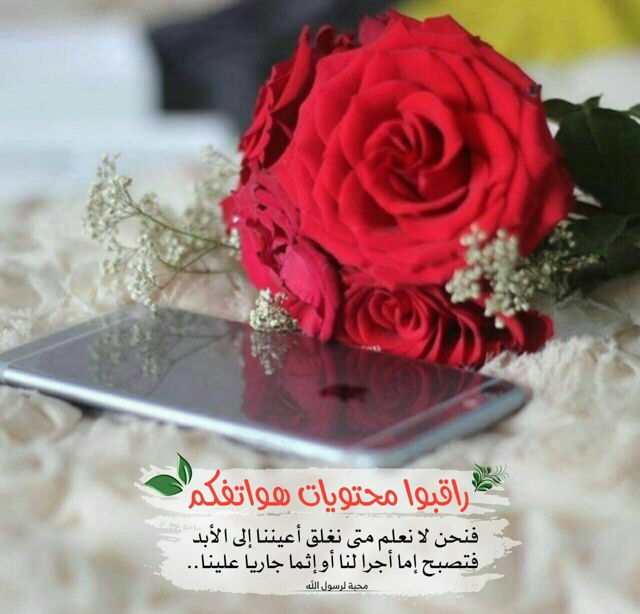 Pin By رحمة عبد الهادي On أجيب دعوة الداعي Profile Picture For Girls Rose Flowers Dp