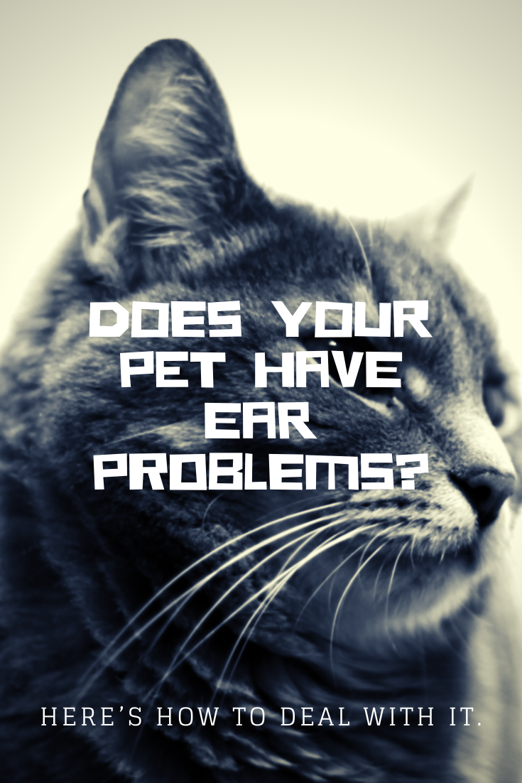 Vet Says Ear Problem Is One Of The Common Reasons Why Pet Owners Seek Help So Here S What You Need To Know And What You Can Do Veterinary Care Pets Pet