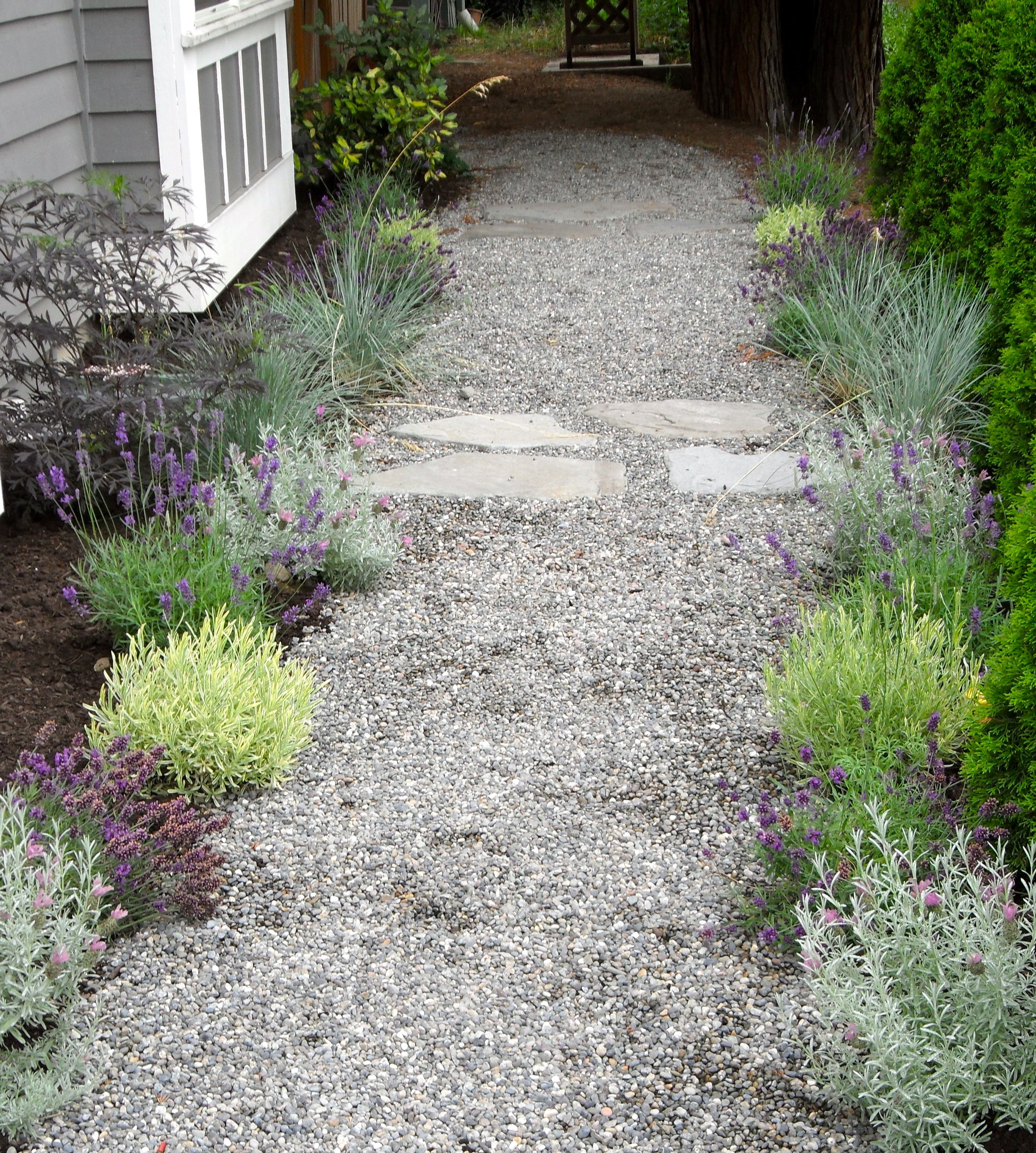 Perfect for the hot, dry side of the house: Mediterranean lavender garden by michaelmuro.com