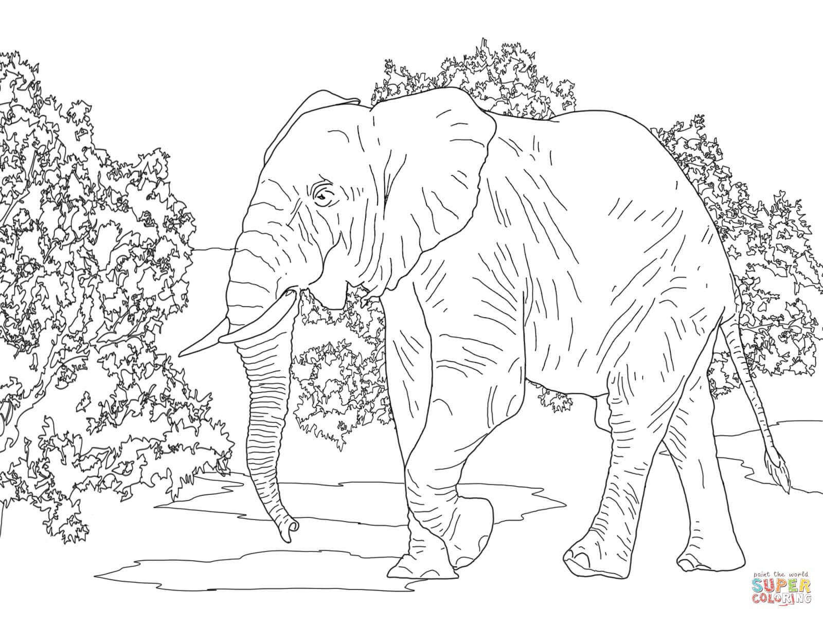 Elephants Coloring Pages Free Coloring Pages Elephant Drawing