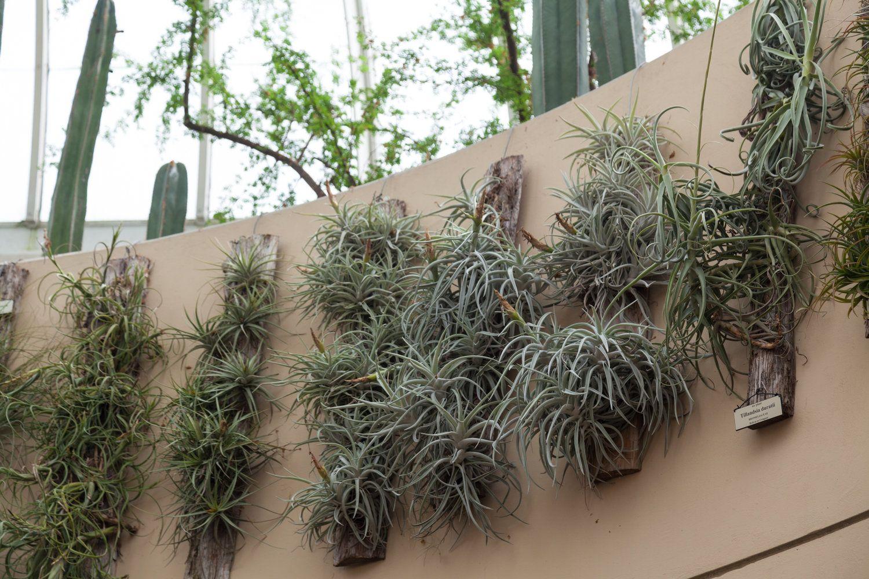 Fertilizing Houseplants 101 Plants, Fertilizer for