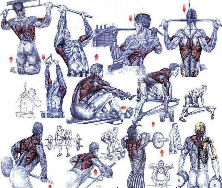 упражнения для начинающих бодибилдеров в картинках