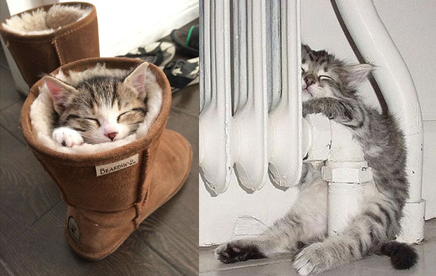 47 Cats Sleeping In Weird Places and Positions Cat