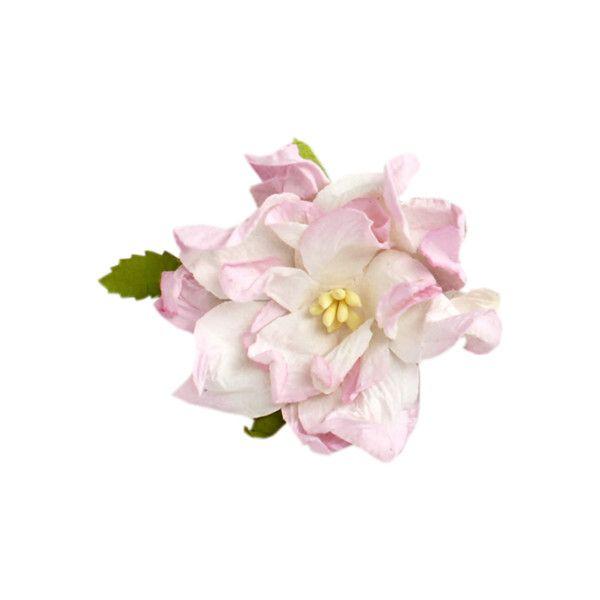 Yandeks.Fotki ❤ liked on Polyvore featuring flowers