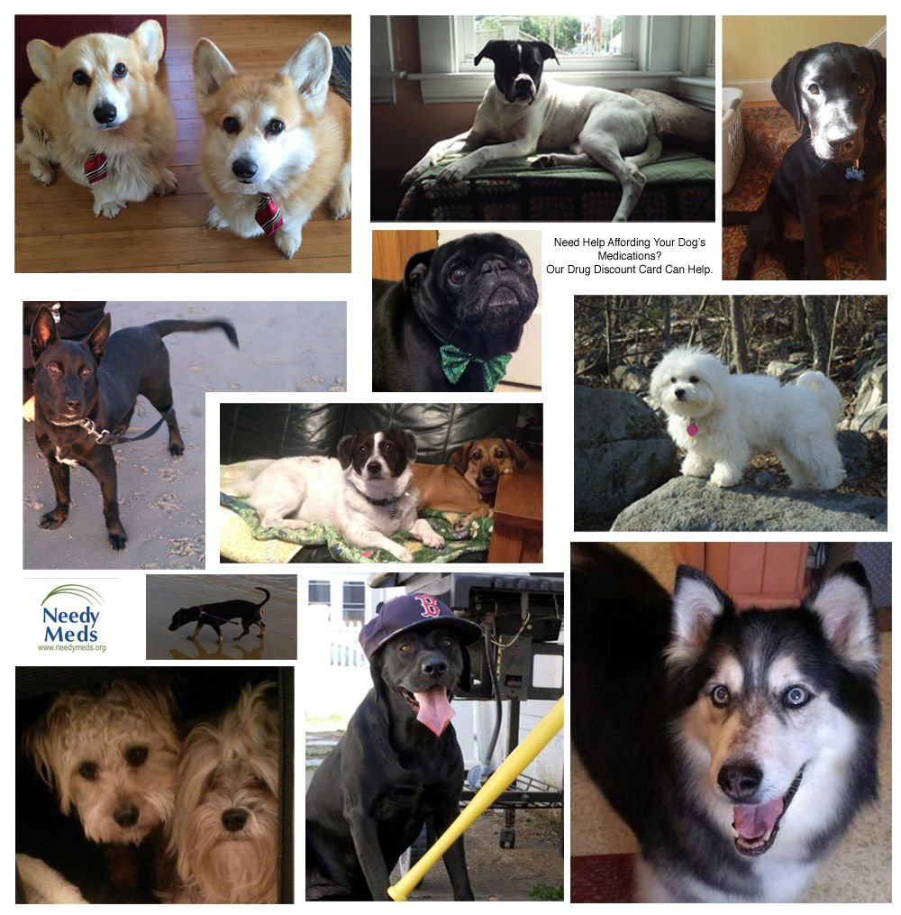 Today's blog post for National Service Dog Month has