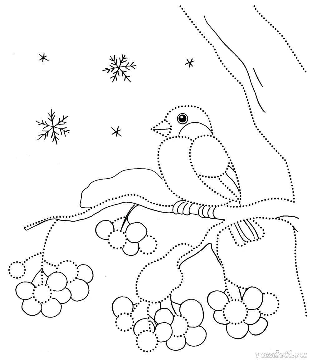 птицы снегири зимой раскраска | Раскраски, Рисунки для ...