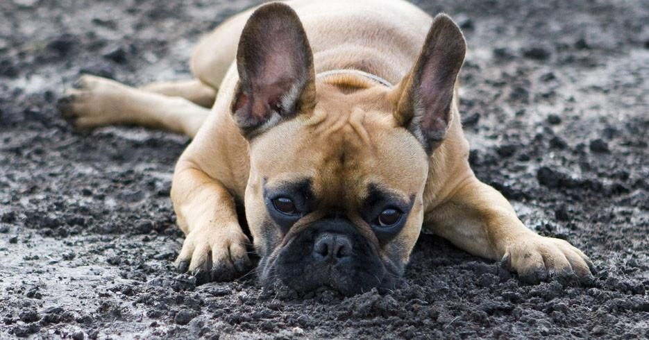 Why do dogs eat dirt and what you can do about it