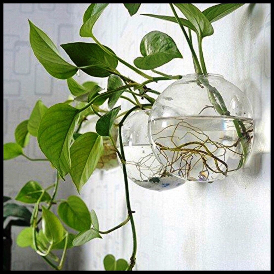 6 Round Glass Wall Hanging Planters Farm Nevada Gardeners Start Here Hanging Glass Planters Plant Vase Hanging Air Plants