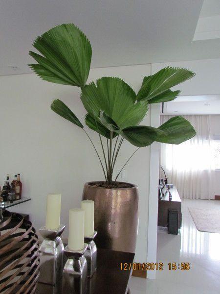 Blog sobre constru o e decora o ideias e modelos de for Plantas decorativas artificiales df