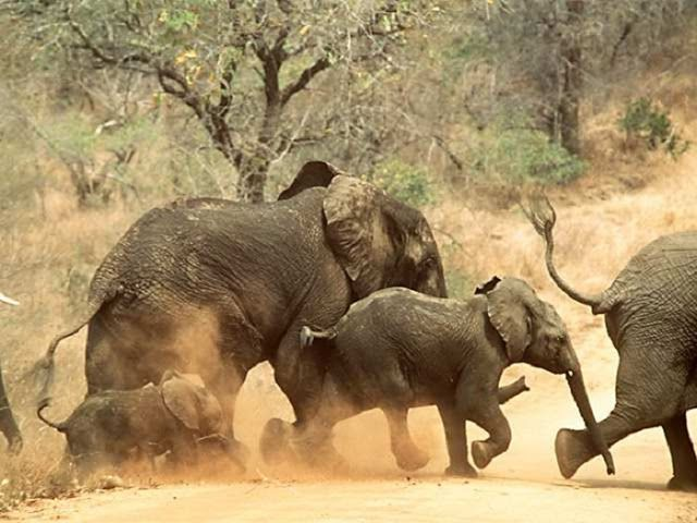 10 Most Dangerous Animals In The World!!! - Wisdomfy