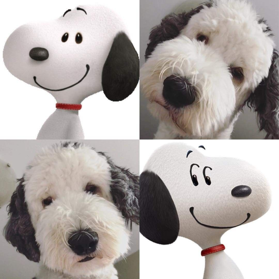 Otis Unleashed Looks Like Snoopy Cute Dogs Breeds Cute Dogs