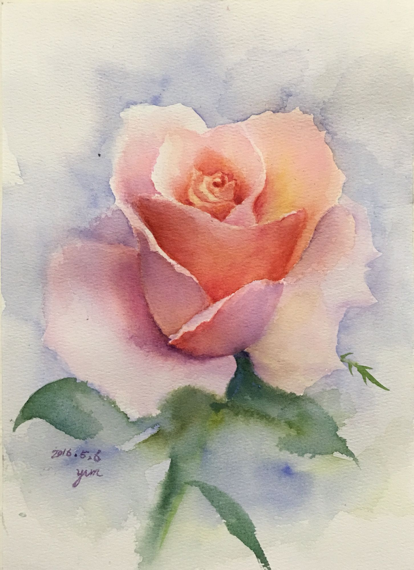 Watercolor Rose Rose Painting Watercolor Flowers Watercolor Rose