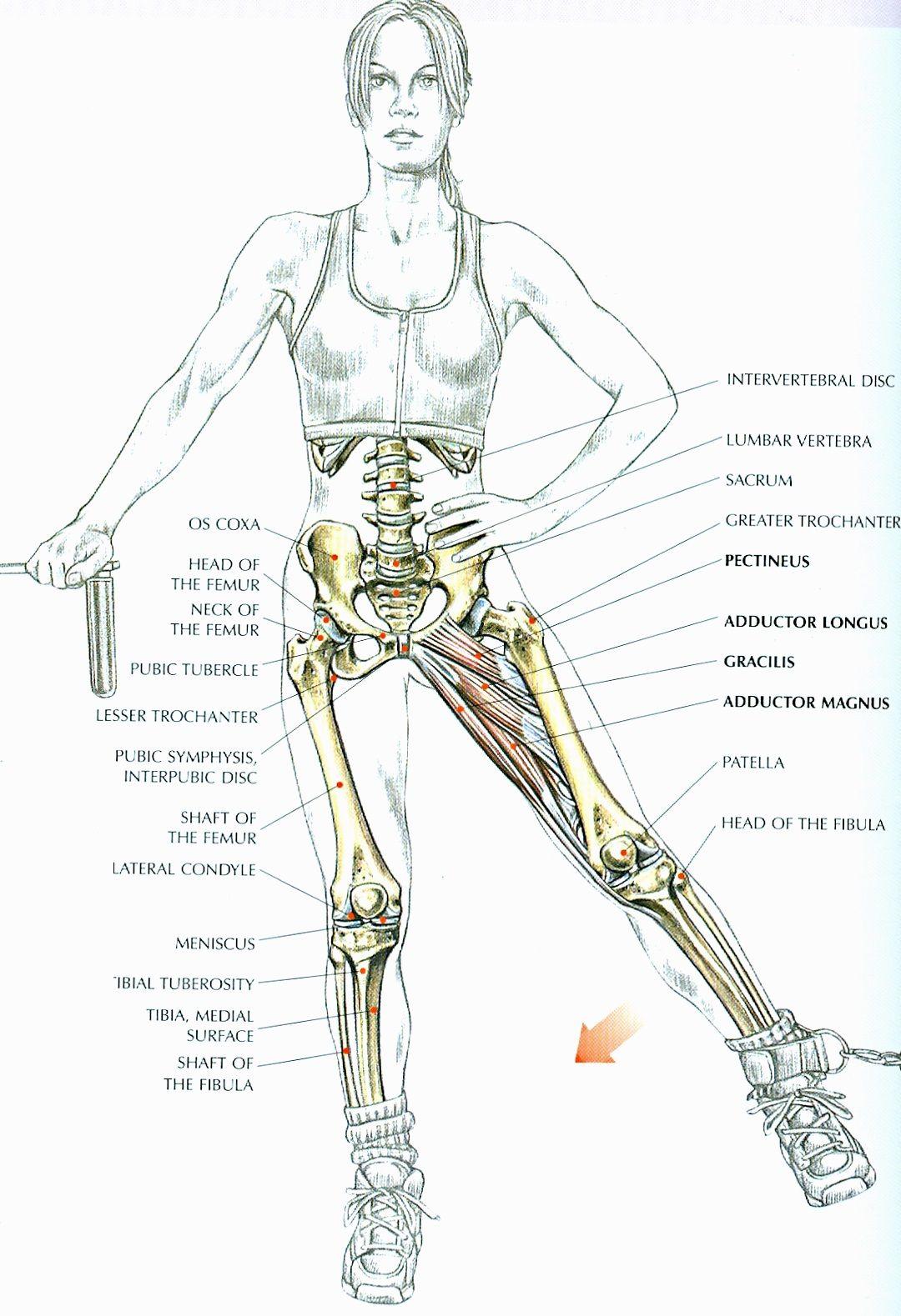 Women\'s strength training anatomy http://kmelot.biblioteca.udc.es ...