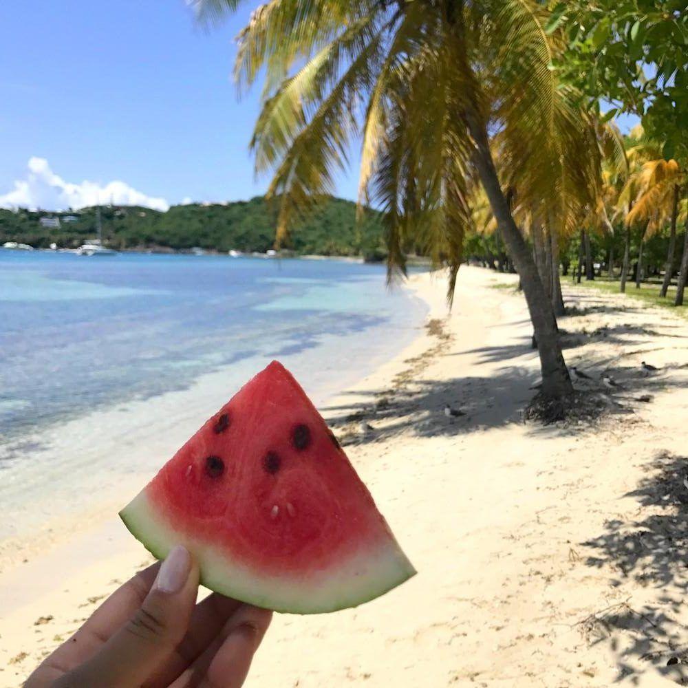 Moustique - Caraïbes 💗