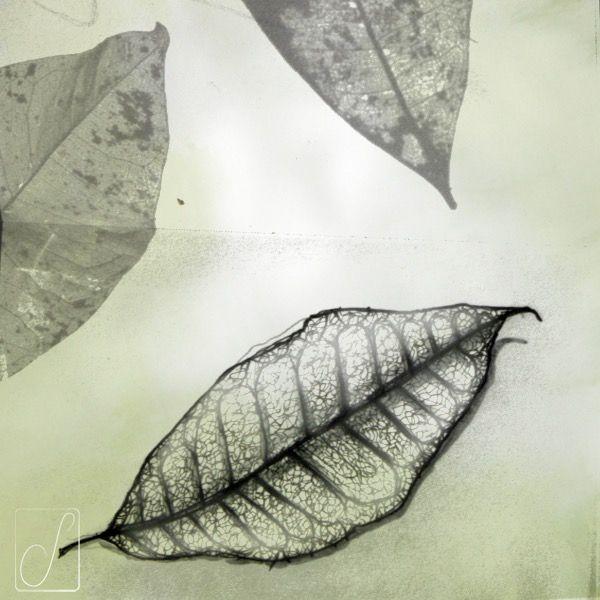 """#unabellagiornata 284/365  #inktober2017 giorno 12 Pakira acquatica - """"Si sta come d'autunno sugli alberi le foglie"""" Giuseppe Ungaretti #inktober  #inktoberaduntratto #erbologiababbana #erbarium #sketchbook #shadow #pachira"""