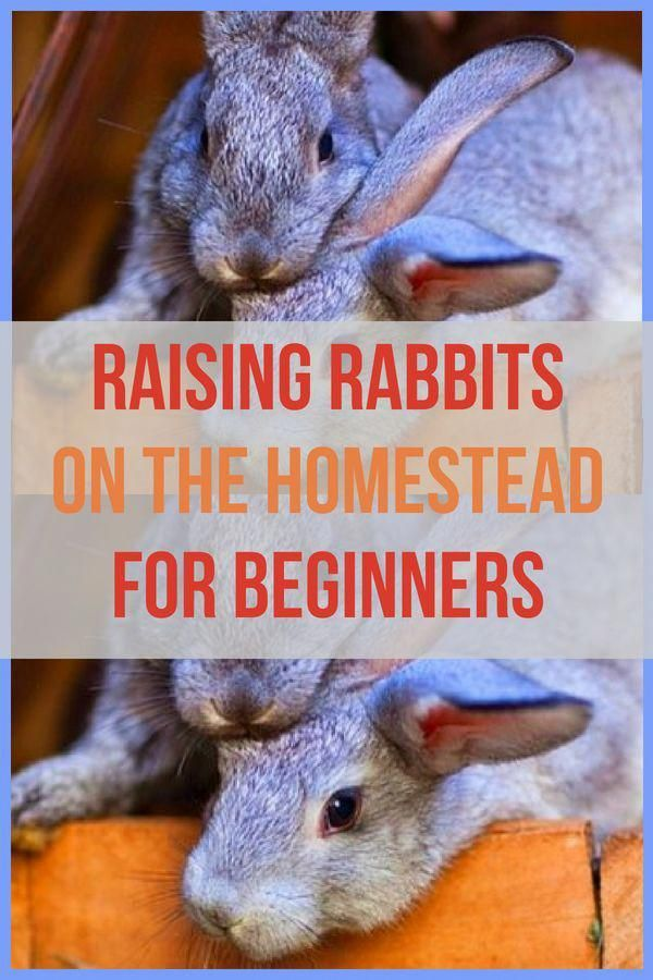 Love this! Great tips for how to raise rabbits for meat on ...