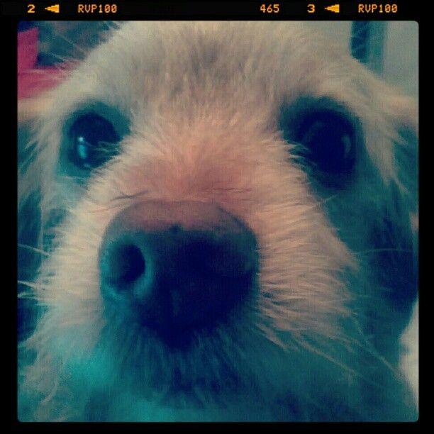 Bidi Bidi Bidi D Animals Instagram Facebook Analytics