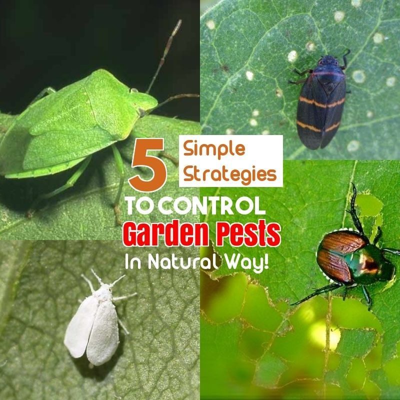 and Effective Ways of Natural Pest Control Covering your plants can keep insects and animals away from eating your plants.    >>> Check this useful article by going to the link at the image.Covering your plants can keep insects and animals away from eating your plants.    >>> Check this useful article by going to the link at the image.