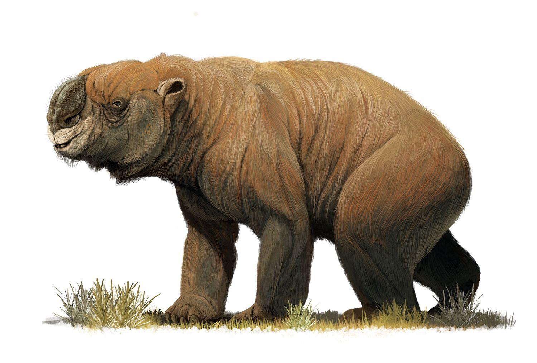Diprotodon optatum. Art by Román García Mora. Extinct