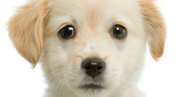 Pin on Dog/Animal Care/Info