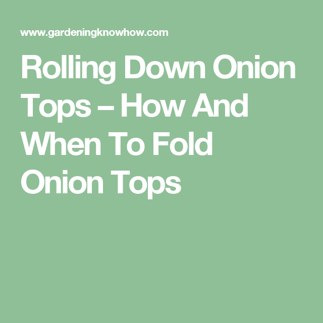 Rolling Down Onion Tops – How And When To Fold Onion Tops