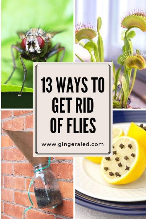 13 Ways To Get Rid Of Flies Gingeraled Get Rid Of Flies Fly Repellant Cleaning Hacks