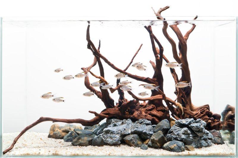 hardscape aquarium - Pesquisa Google