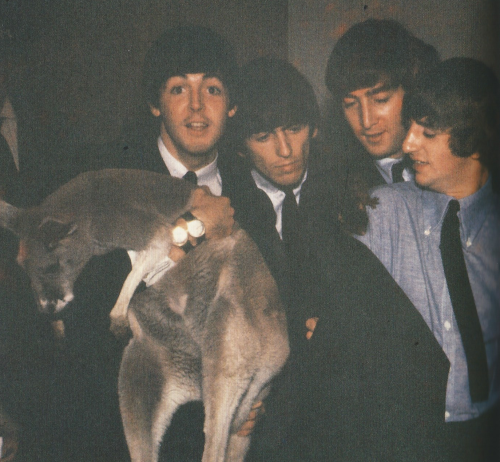 The Beatles in Brisbane, Australia June 1964 with five-foot tall kangaroo Lady…