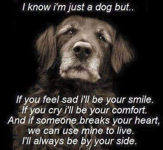 Pin by lynn henry on wise words Dog quotes, Dogs, Dog lovers