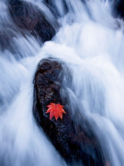 Simply Beautiful Photographs Tips On Capturing Motion Gallery National Geographic Japan Photograph Photo Nature Photography