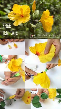 How to make Hibiscus paper flower with free templates, easy to follow #paperflowersdiy