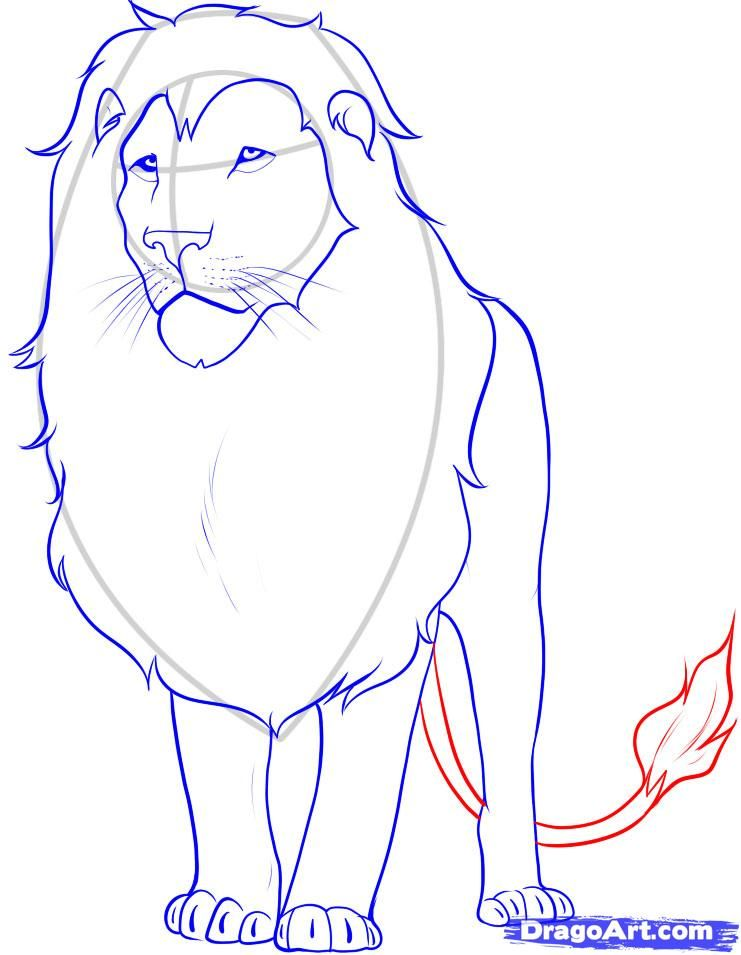how to draw a lion step 12 crafts pinterest drawings art