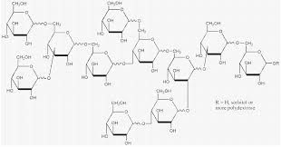 Polysaccharides Are Polymeric Carbohydrate Molecules Composed Of