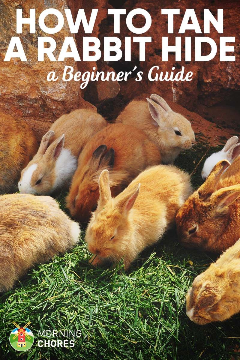 Tanning Rabbit Hides: Easy Guide to Skin a Rabbit and Tan the Hide ...