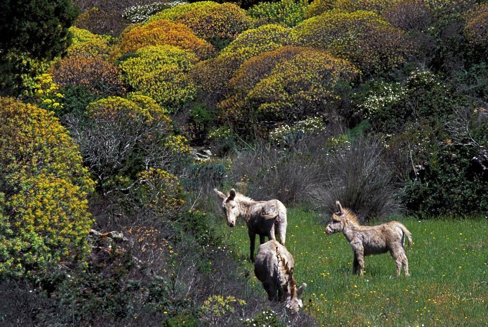 Mezione speciale categoria Animali per gli asinelli del Parco nazionale dell'Asinara, realizzata da Bruno Bostica (Concorso Obiettivo Terra 2014)