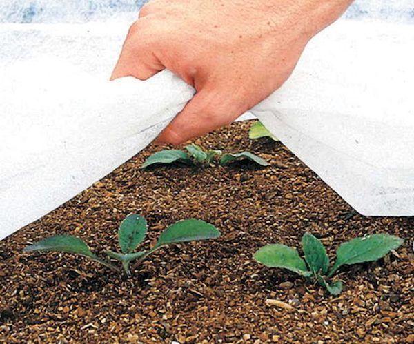 как готовить семена к посадке на рассаду