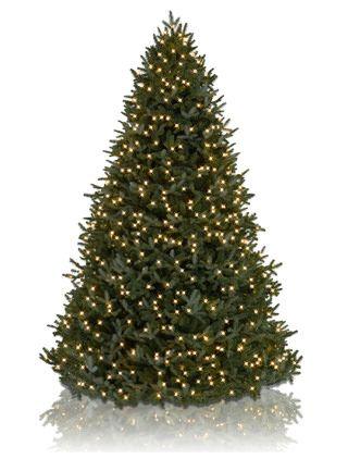 Bh Fraser Fir 8482 Realistic Artificial Christmas Trees Balsam Hill Christmas Tree Christmas Tree Sale