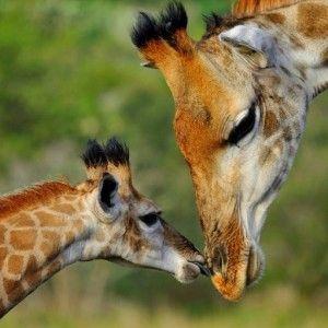 Ranger de brousse, mon rêve d\'enfant... Voyage en Afrique du Sud ...