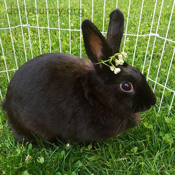 queen bunny wears her flower crown june 9 2016 june 2016