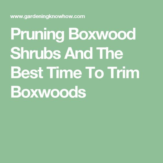 Pruning Boxwood Shrubs And The Best Time To Trim Boxwoods Boxwood Boxwood Bush Box Wood Shrub