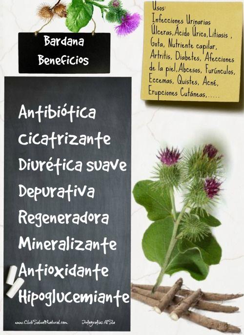 Beneficios De La Bardana El Antibiótico Vegetal Hierbas Curativas Salud Natural Remedios Naturales