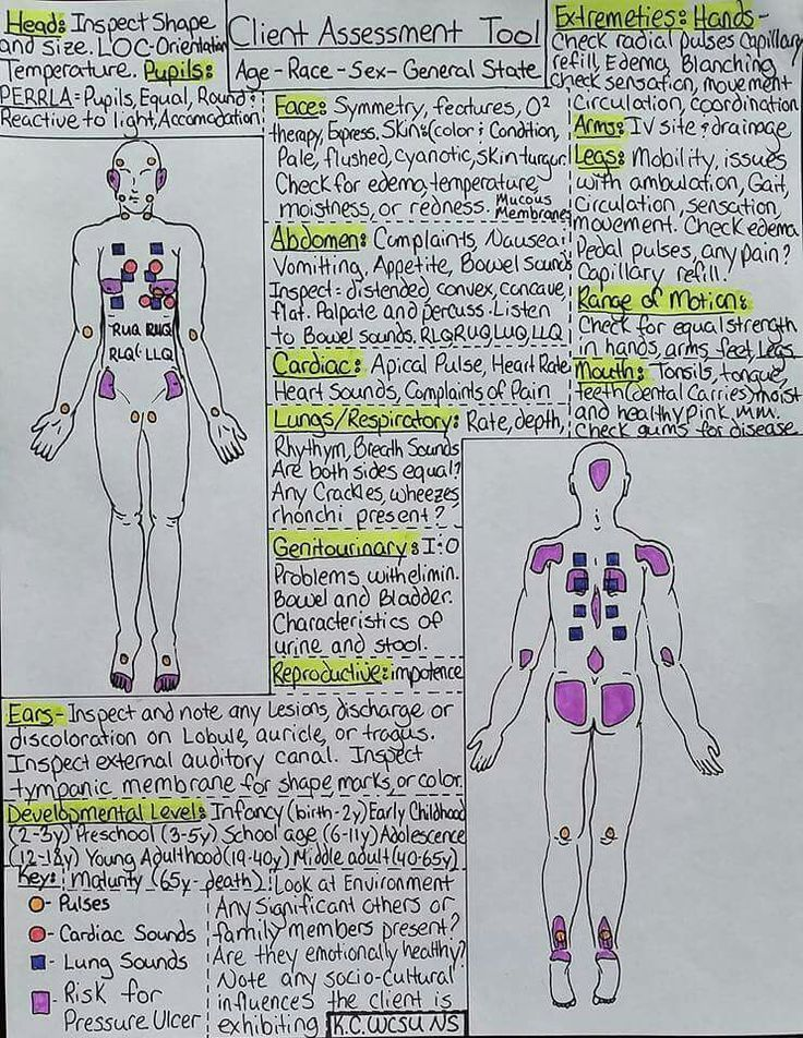 Head To Toe Assessment Cheat Sheet  Anatomy    School