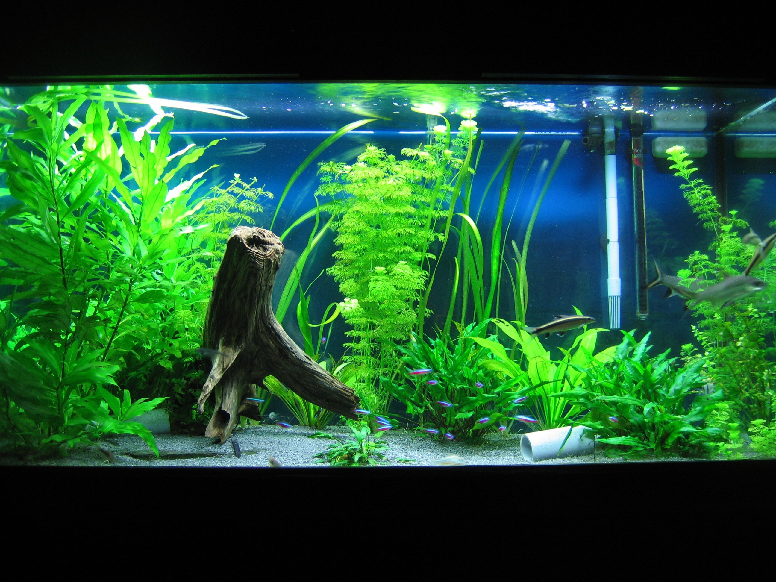 Freshwater aquarium odd fish - Fish Tank Decor Ideas