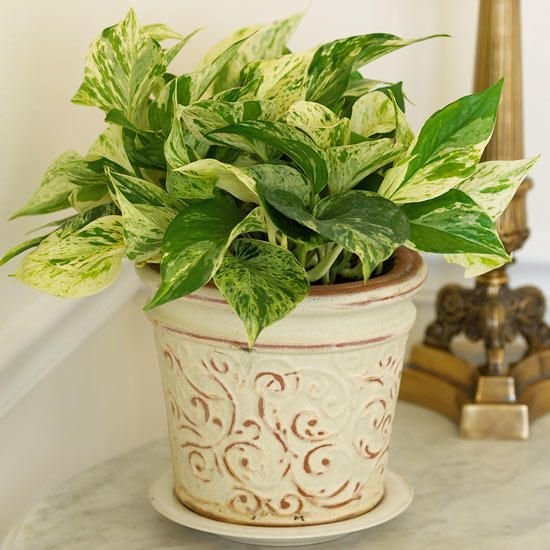 House Plants For Shady Rooms: These Are The 15 Best Houseplants For Your Bedroom