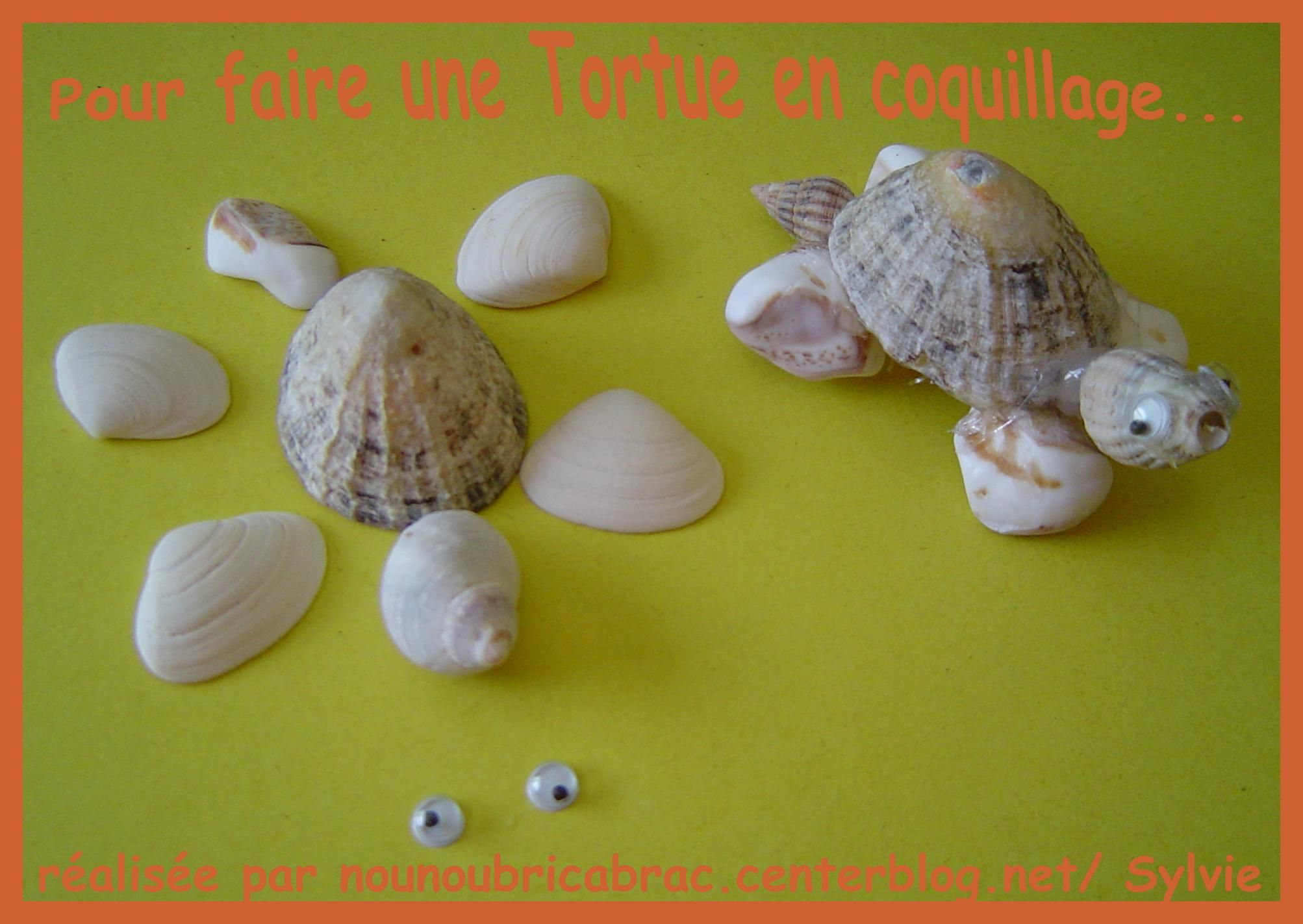 tortue en coquillages cr ation avec les enfants. Black Bedroom Furniture Sets. Home Design Ideas