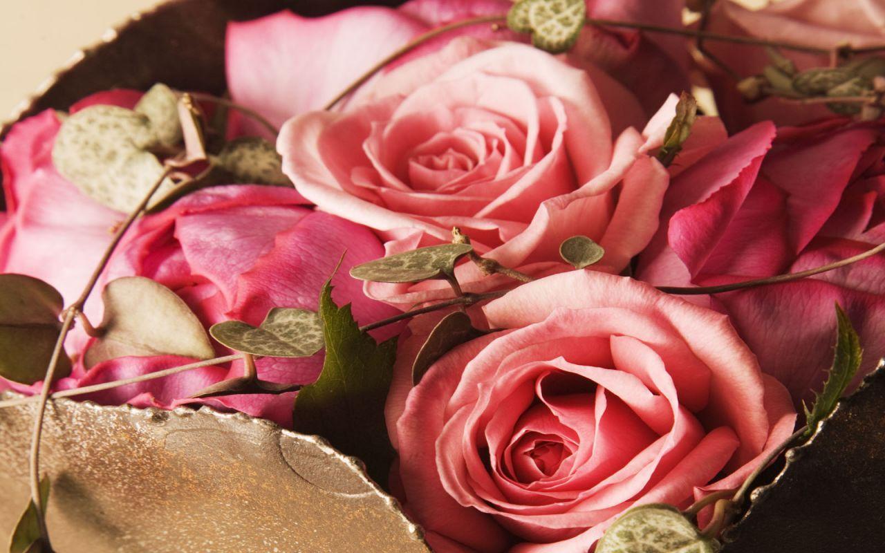 Pink Roses Beautiful flowers wallpapers, Flowers, Flower