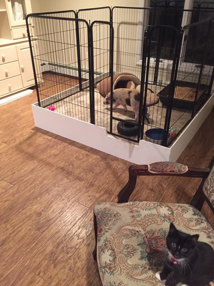 How To Build A Dog Crate End Table