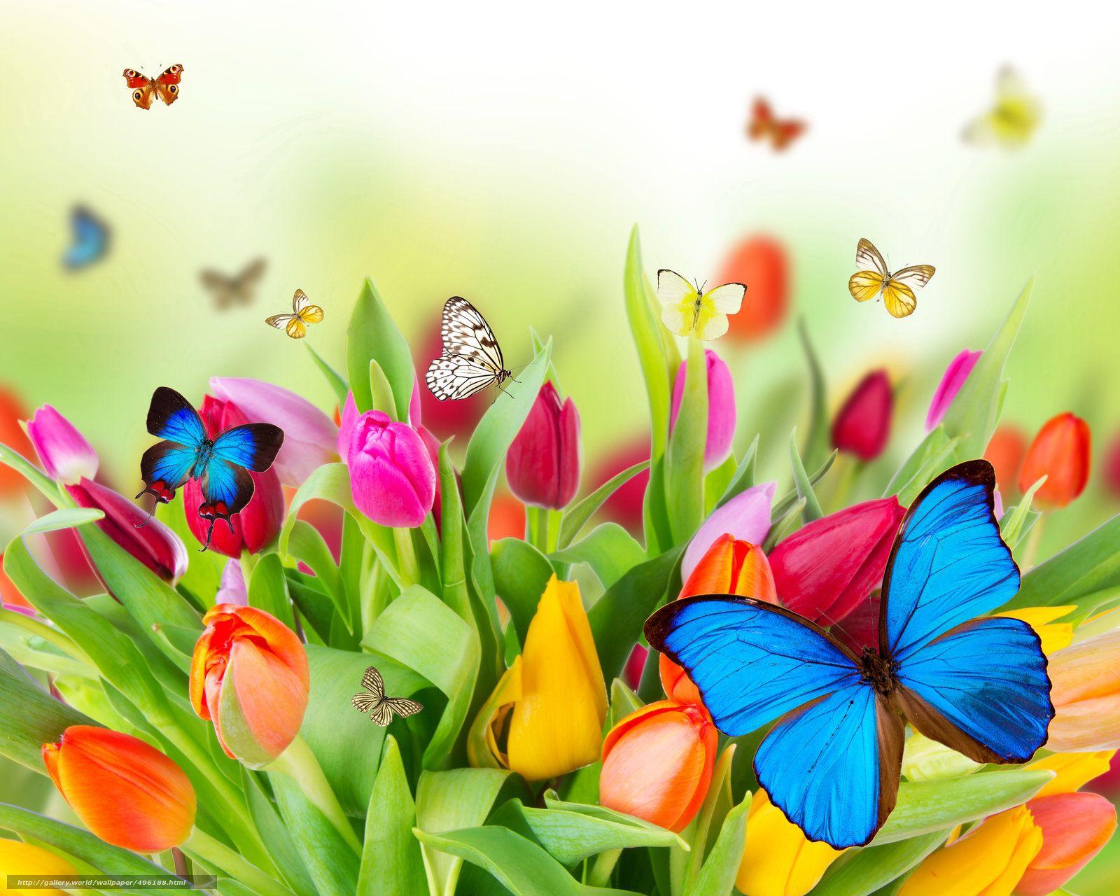 Fotografias De Mariposas Y Flores: Descargar Gratis Tulipanes, Mariposas, Deja